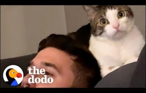 Woman Becomes Third Wheel In Her Cat And Husband's Relationship